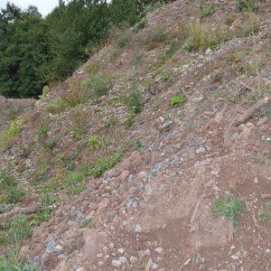 Boden & Erdaushub m. Steinen und Grasnarbe